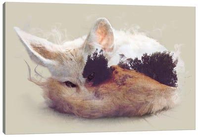 Desert Fox Canvas Print #DTA10