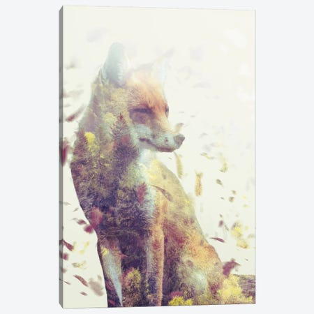 Fall Fox Canvas Print #DTA15} by Dániel Taylor Canvas Art