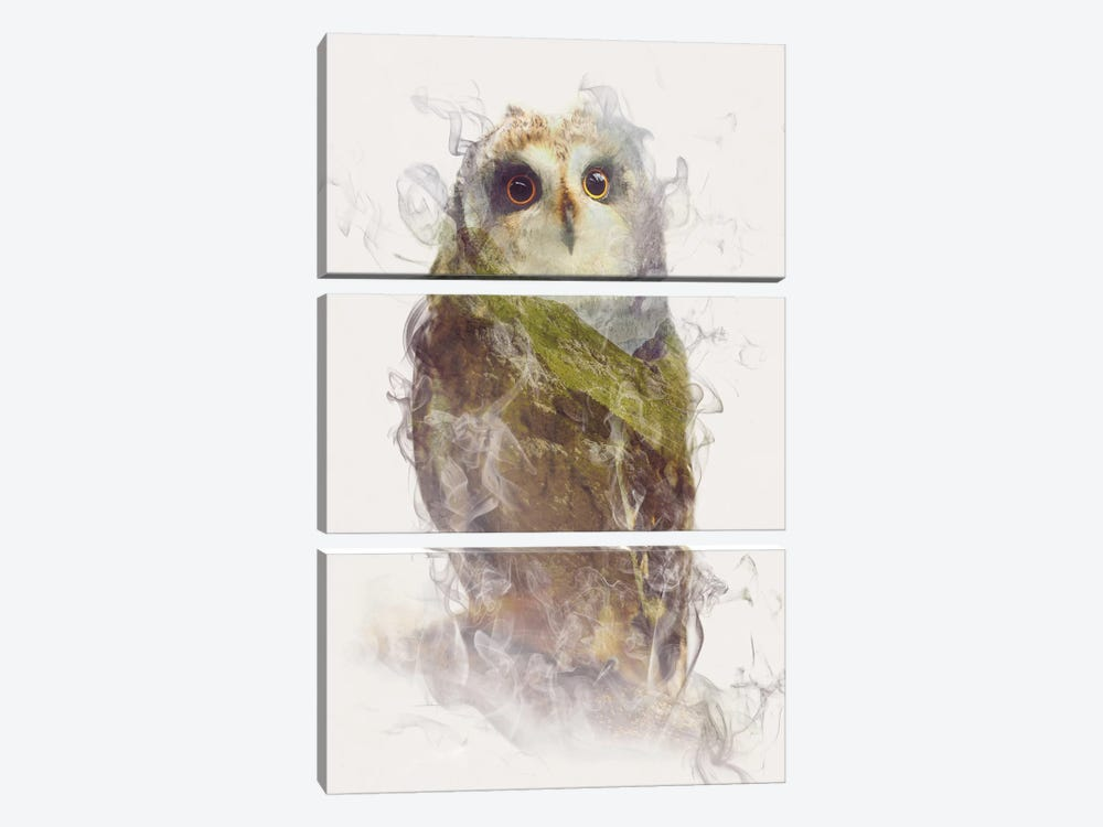 Owl by Dániel Taylor 3-piece Canvas Print