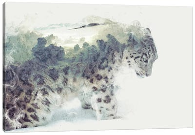 Snow Leopard by Dániel Taylor Canvas Print