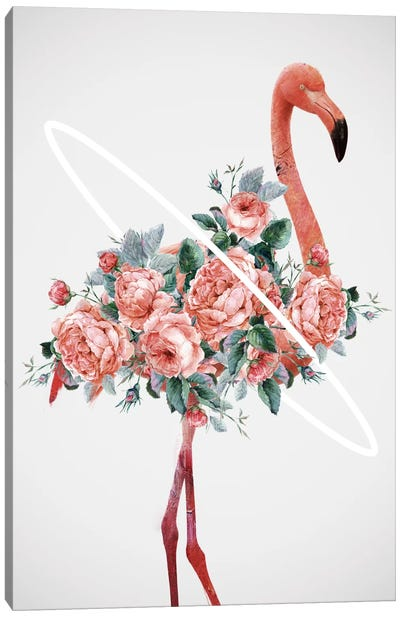 Flamingo Canvas Print #DTA57