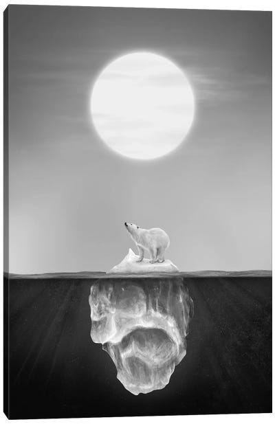 Polar Bear Canvas Print #DTA66