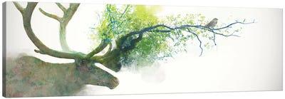Caribou Canvas Art Print