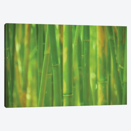 Emerald Forest Canvas Print #DTH11} by Dautlich Canvas Artwork