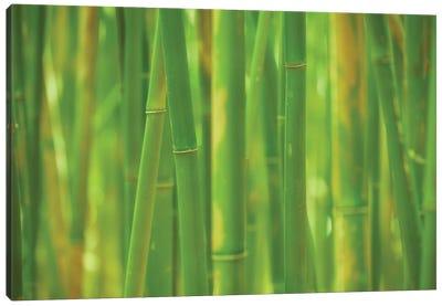 Emerald Forest Canvas Art Print