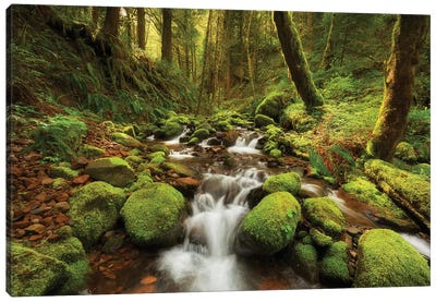 Enchanted Creek Canvas Art Print