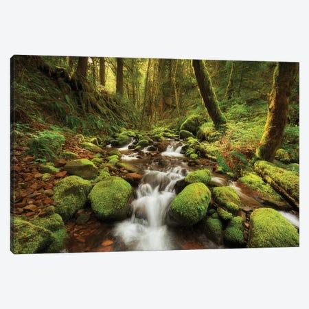 Enchanted Creek Canvas Print #DTH12} by Dautlich Canvas Artwork