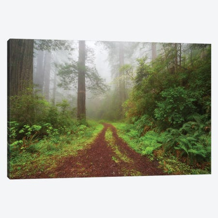 Enchanted Grove Canvas Print #DTH13} by Dautlich Canvas Wall Art