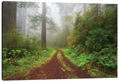 Enchanted Grove Canvas Art Print