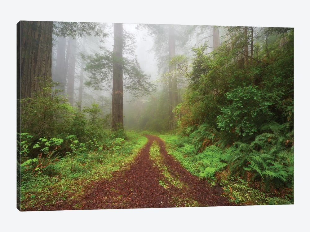 Enchanted Grove by Dautlich 1-piece Canvas Artwork