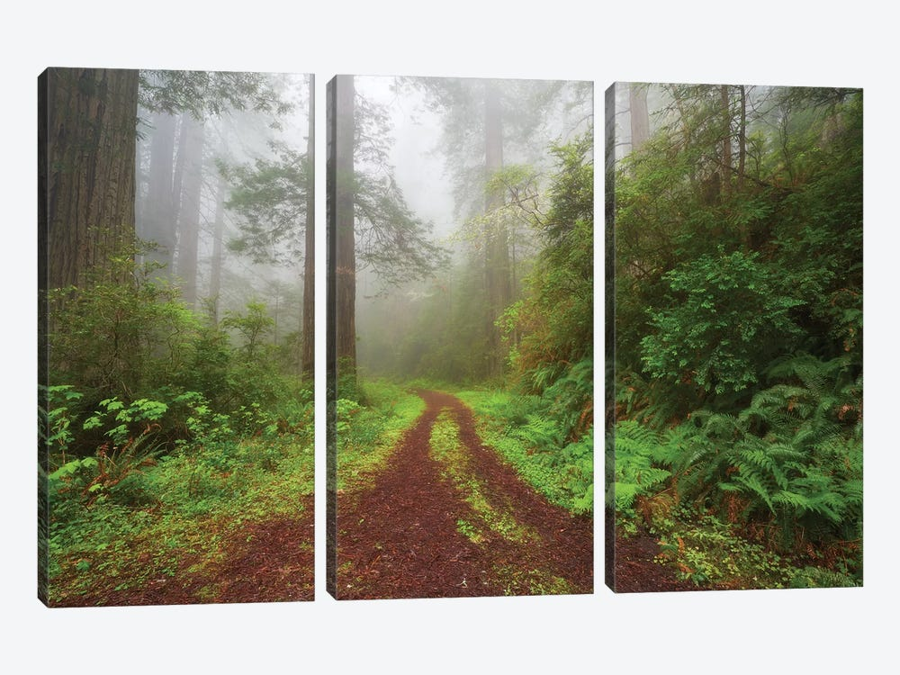 Enchanted Grove by Dautlich 3-piece Canvas Wall Art