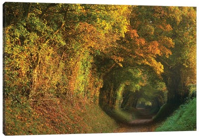 Fall Tunnel Canvas Art Print