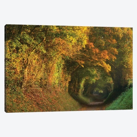 Fall Tunnel Canvas Print #DTH18} by Dautlich Canvas Artwork