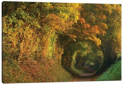 Fall Tunnel Canvas Art Print
