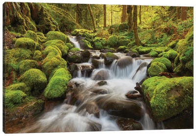 Ancient Streams Canvas Art Print