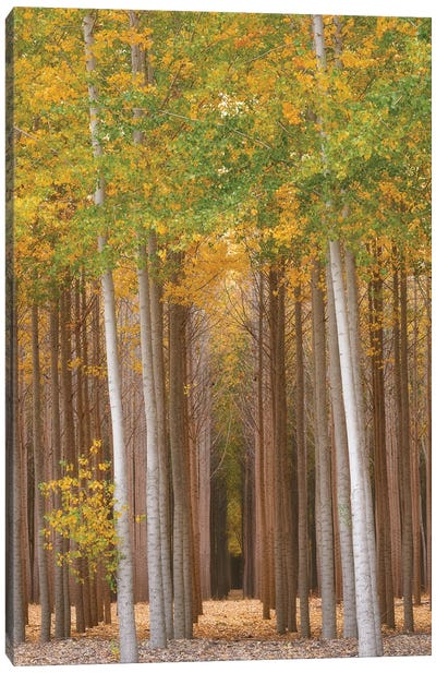 Forest Glimmer Canvas Art Print