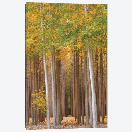 Forest Glimmer Canvas Print #DTH22} by Dautlich Art Print
