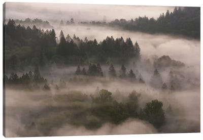 Forest Shroud Canvas Art Print