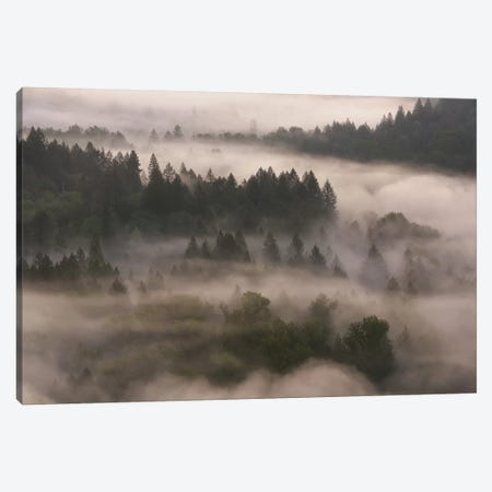 Forest Shroud Canvas Print #DTH23} by Dautlich Canvas Art Print