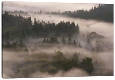 Forest Shroud Canvas Art Print