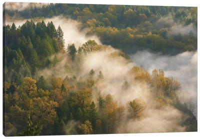Golden Autumn Mist Canvas Art Print