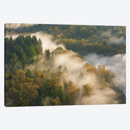Golden Autumn Mist Canvas Print #DTH27} by Dautlich Canvas Wall Art