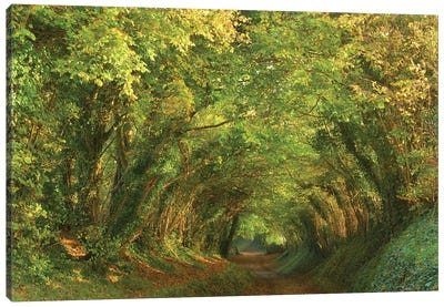Golden Tunnel Canvas Art Print