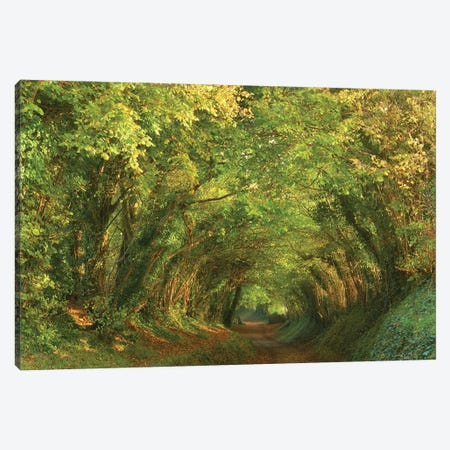 Golden Tunnel Canvas Print #DTH28} by Dautlich Canvas Art Print