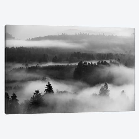 Mist Forest Magic Canvas Print #DTH34} by Dautlich Canvas Print