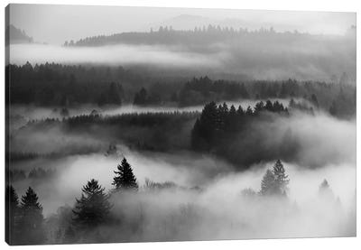 Mist Forest Magic Canvas Art Print