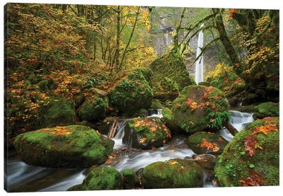 Mossy Dream Canvas Art Print
