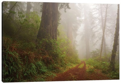 Mystery Trail Canvas Art Print