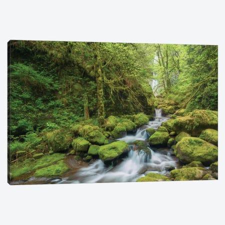 Secret Creek Canvas Print #DTH48} by Dautlich Canvas Print