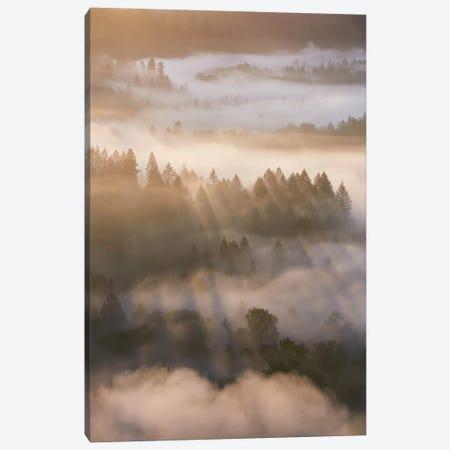 Shimmering Shadows Canvas Print #DTH50} by Dautlich Canvas Artwork