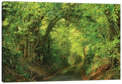 Spring Lane Canvas Art Print