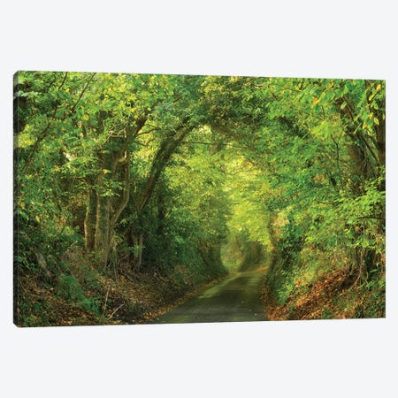 Spring Lane Canvas Print #DTH53} by Dautlich Canvas Wall Art