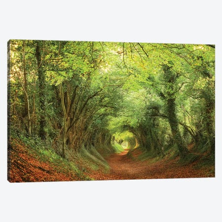 Tree Tunnel Canvas Print #DTH59} by Dautlich Canvas Wall Art