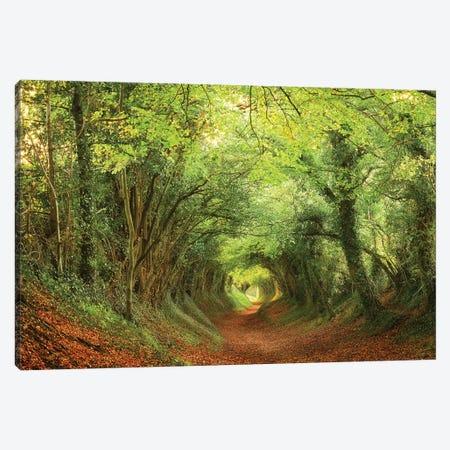 Tree Tunnel Canvas Print #DTH59} by Dautlich Canvas Wall Art