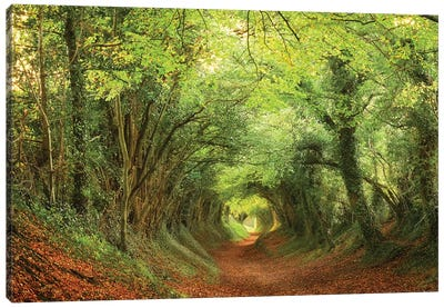 Tree Tunnel Canvas Art Print