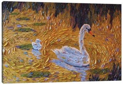 A Morning Swim Canvas Art Print