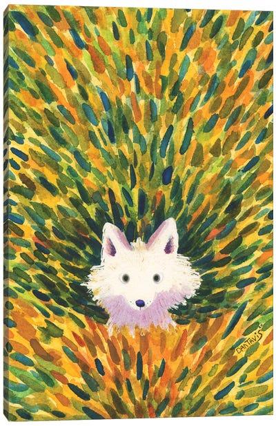 White Fox Canvas Art Print
