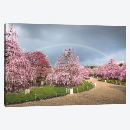 Spring In Japan XIX Canvas Print #DUE120} by Daisuke Uematsu Canvas Art