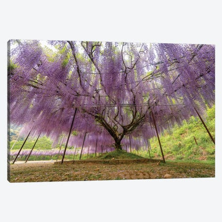 Spring In Japan XXII Canvas Print #DUE122} by Daisuke Uematsu Canvas Artwork