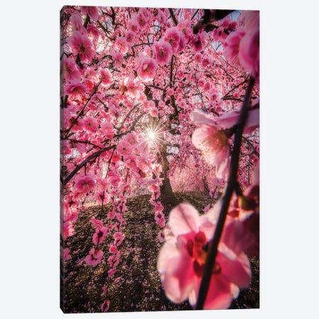 Spring In Japan XXIV Canvas Print #DUE124} by Daisuke Uematsu Canvas Art Print