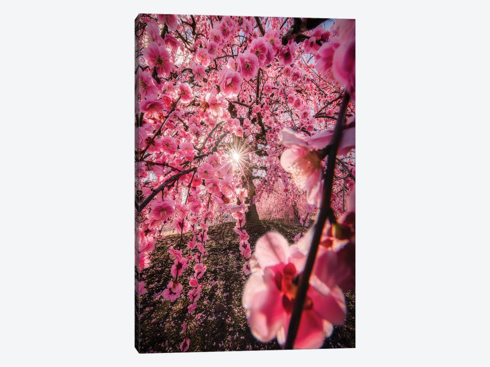 Spring In Japan XXIV by Daisuke Uematsu 1-piece Canvas Art Print