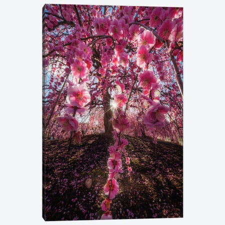 Spring In Japan XXV Canvas Print #DUE125} by Daisuke Uematsu Canvas Print