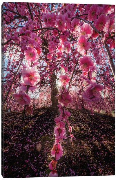 Spring In Japan XXV Canvas Art Print