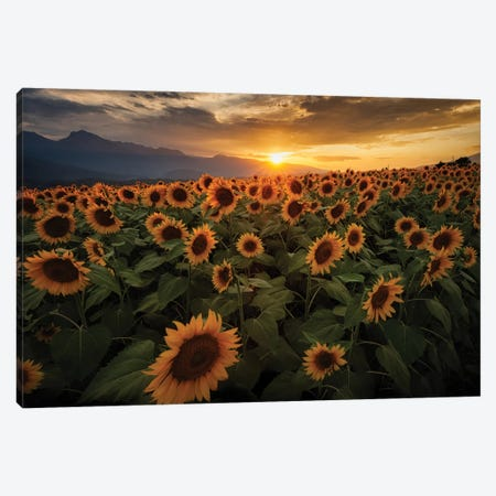 Summer In Japan XIII Canvas Print #DUE126} by Daisuke Uematsu Canvas Art Print