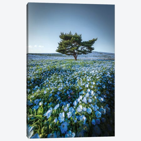 Spring In Japan XXVIII Canvas Print #DUE138} by Daisuke Uematsu Art Print
