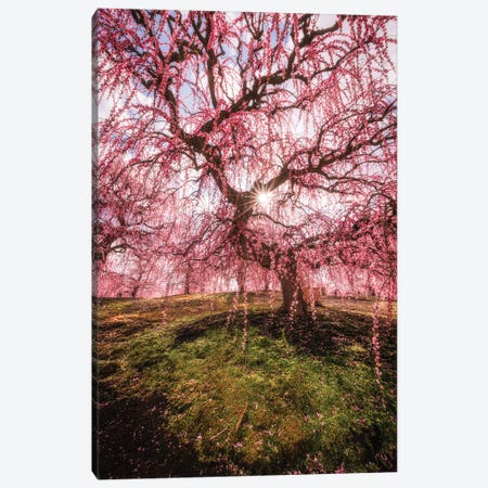 Spring In Japan XXX Canvas Print #DUE140} by Daisuke Uematsu Canvas Wall Art